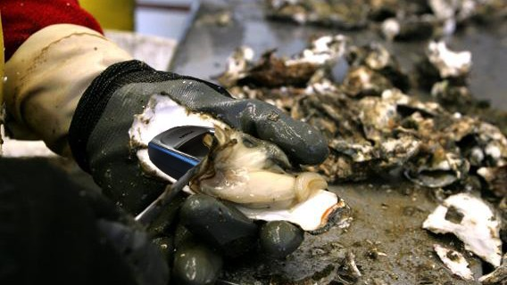 oyster-phone